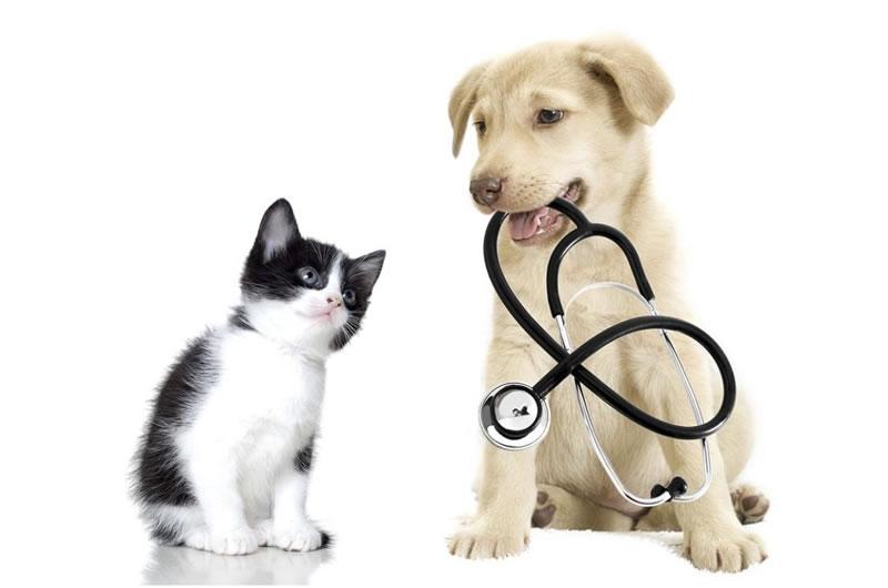 farmacia-rolando-vigliano-biellese-reparti-veterinaria